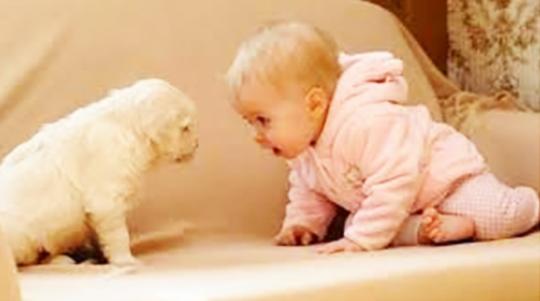 PUPPY-BABY